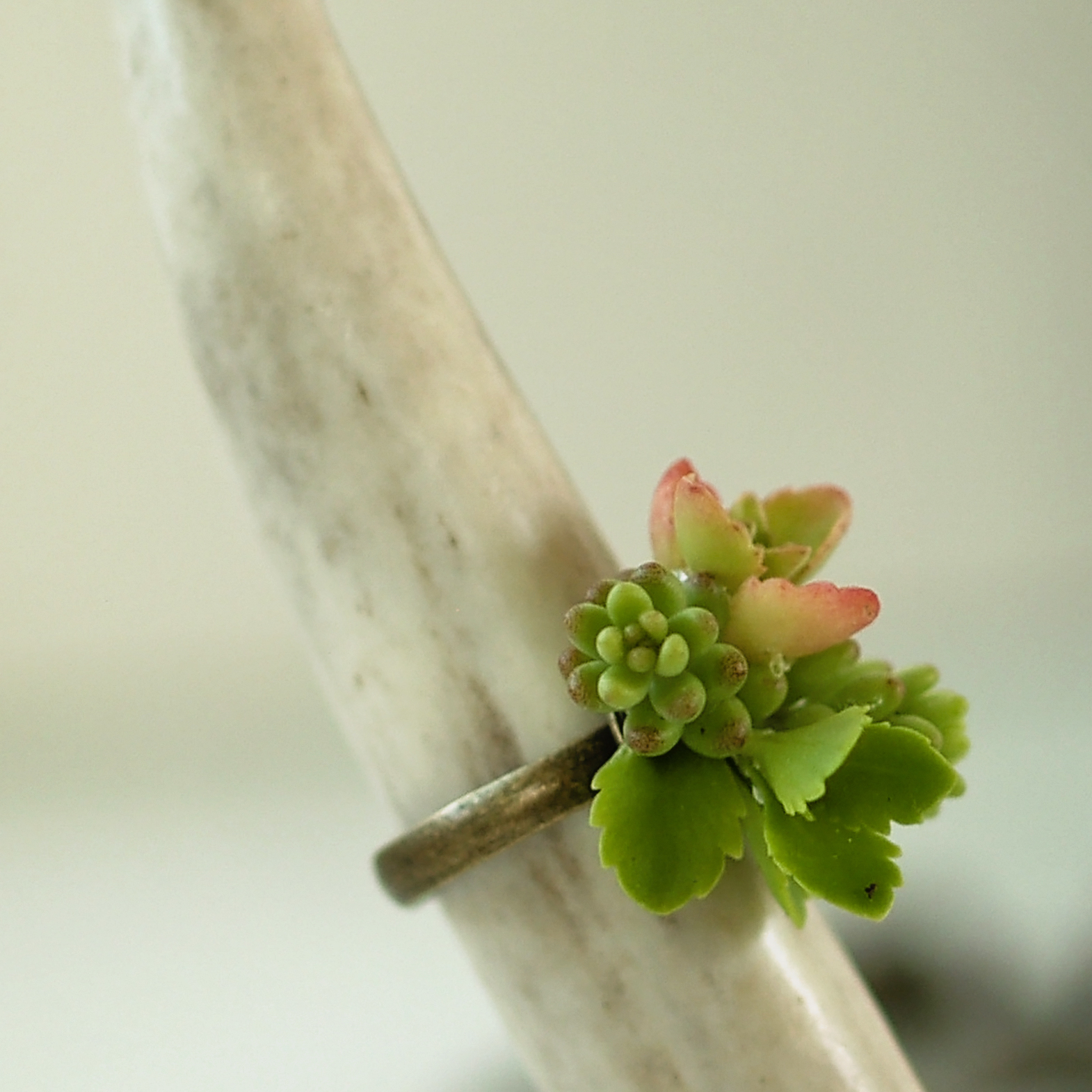 succulent jewelry handmade ring